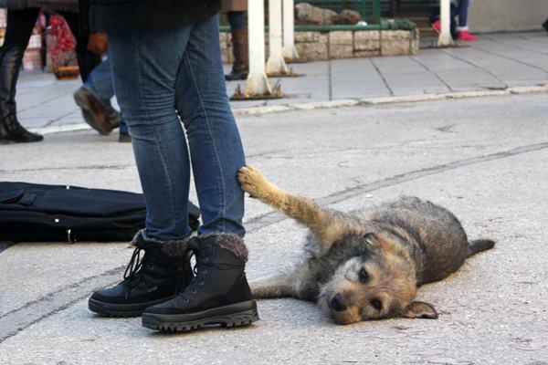 Pas iz Sarajeva - foto Damir Hajdarbašić