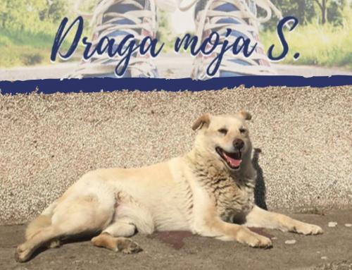 Draga moja S.: Ako živiš u BiH i voliš životinje uvijek imaš razlog za tugu