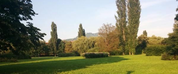 kamberovica polje